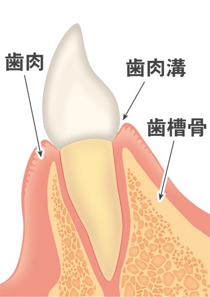 歯周病の進行と治療法